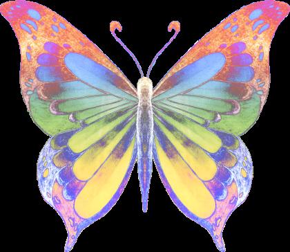 butterfly-2-transparent-lig